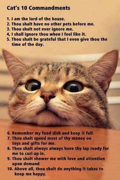 cats  commandments cat jokes cats funny cat pictures
