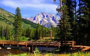 Landscape, Nature, Wooden, Bridge, Mountain, River, Pine, Trees