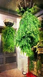 Kokedama Selber Machen : unique kokedama samambaia ball ideas for hanging garden plants selber machen ideas plant ~ Orissabook.com Haus und Dekorationen