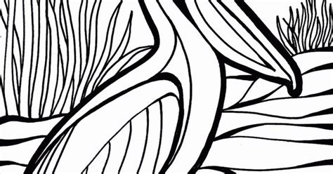 Pelican Bird Coloring Pages