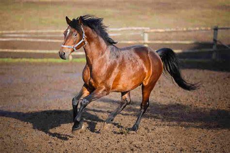 fotos pferden spiele mit pferden spa 223 und erziehung zugleich markt de