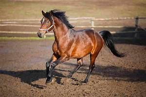 Bilder Von Pferden : spiele mit pferden spa und erziehung zugleich ~ Frokenaadalensverden.com Haus und Dekorationen