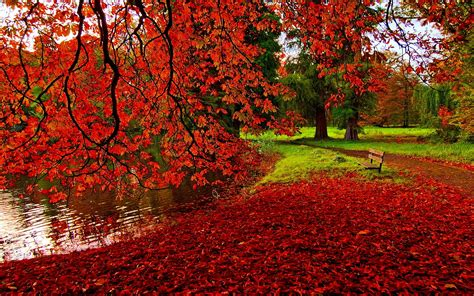 40 Autumn Scene Background Wallpaper For Desktop
