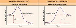 Potential  Kinetic  Free  And Activation Energy  U2013 Biology