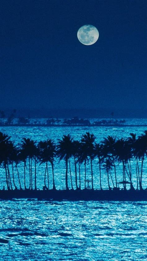 puerto rico landscapes moonlight nature palm trees