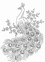 Printable Peacock Coloring Pages Peacocks Sheet sketch template