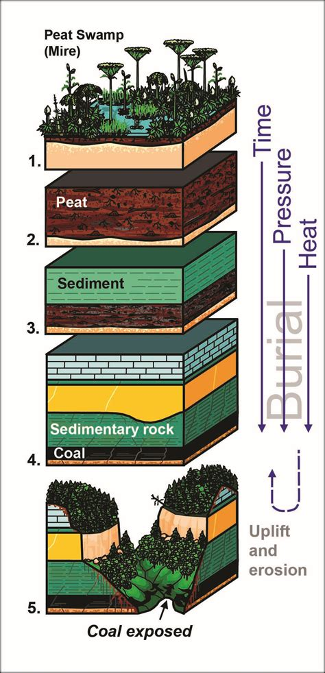 1b carbon it s elemental