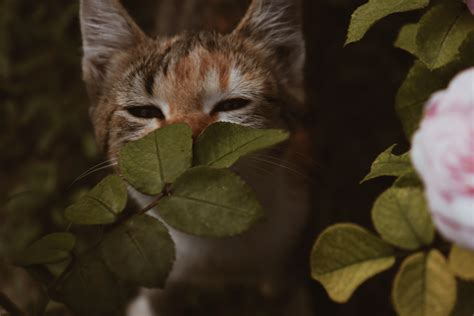 Ear Problems In Cats Common Symptoms And Treatments
