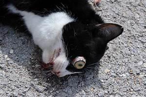 Dead Cat | www.pixshark.com - Images Galleries With A Bite!