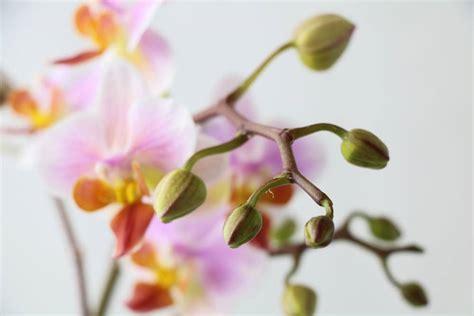 Neuer Rollrasen Wird Gelb by Orchidee W 228 Chst Nicht Weiter Trieb Wird Gelb Braun Was Tun