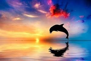 Wallpaper Dolphin, Sunset, Beautiful ocean, 5K, Animals, #935