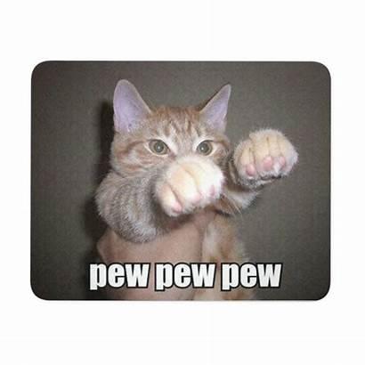 Cat Memes Meme Funny Feisty Cats Crazy