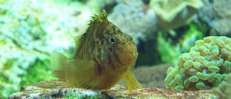 forum aquarium eau de mer kh aquarium recifal kh aquarium recifal blackhairstylecuts baisser kh aquarium eau de mer