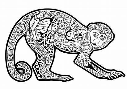 Coloring Pages Adult Animals Unique Animal Monkey