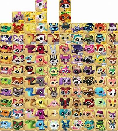 Dash Tag Pets Animal Jam Wiki Fandom