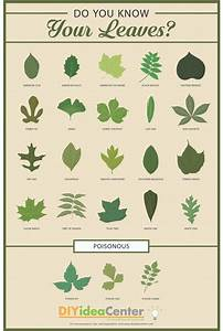 Leaf Identification Guide DIYIdeaCenter com