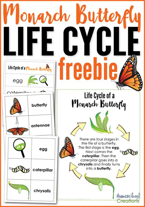 Monarch Butterfly Life Cycle Printables  Homeschooling  Butterfly Life Cycle, Life Cycles