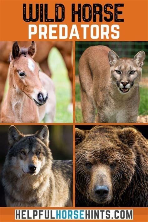 horses predators wild prey carnivorous horse animals
