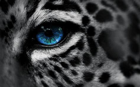 Blue Cheetah Wallpaper - WallpaperSafari