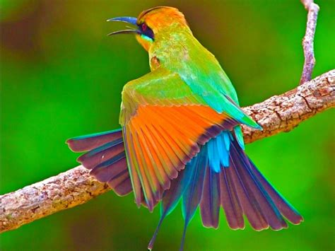 The Most Beautiful Birds In The World