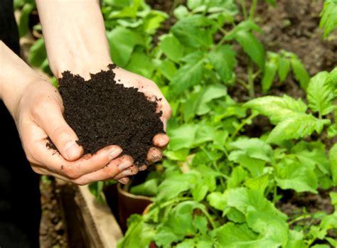 kaffeesatz als blumendünger für zimmerpflanzen kaffeesatz als d 252 nger alten kaffee wiederverwenden
