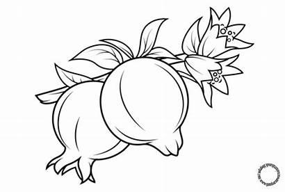 Buah Mewarnai Gambar Sketsa Naga Delima Untuk