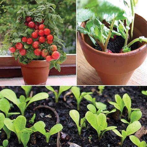 garden in pots beginners beginners guide 10 easiest vegetables to grow in a pot slide 1 ifairer com