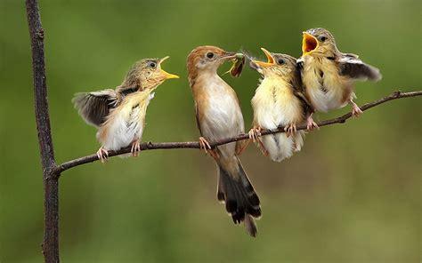 birds feeding babies wallpapers 1920x1200 706915
