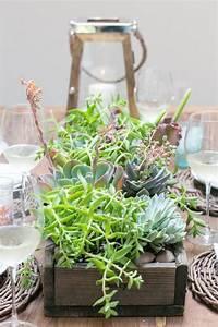 Comment Crer Des Arrangements De Plantes Grasses