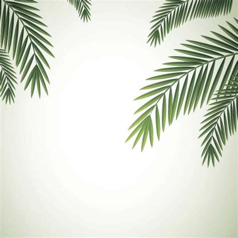 Palm Background Green Palm Leaves Backgrounds Vector 06 Free