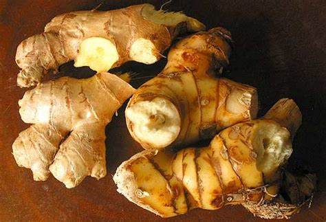 galanga cuisine ingredient spotlight what is galangal the kitchn