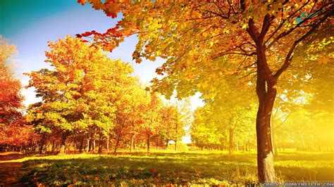 autumn tree wallpaper autumn tree wide hd wallpaper