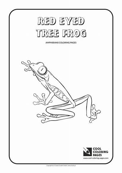Coloring Frog Tree Eyed Pages Whale Sperm