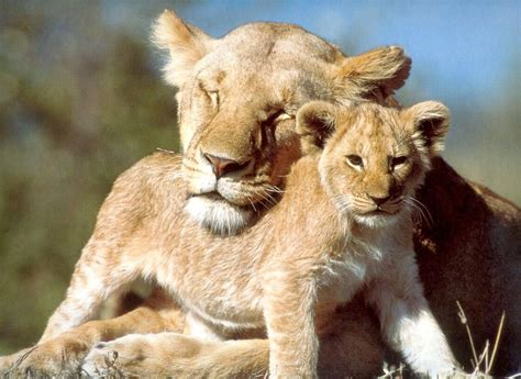 beautiful animal pictures wallpaper labels animals