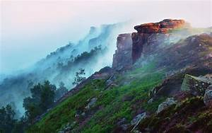 Early morning mountain landscape, forest, fog, flowers ...