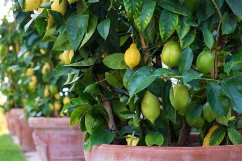 Zimmerpflanzen Richtig Pflegen 7 Tipps by Pflanzen Richtig 252 Berwintern 10 Experten Tipps F 252 R Ihren
