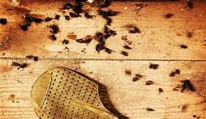 Eliminer Les Moucherons : comment se d barrasser des moucherons c t maison ~ Nature-et-papiers.com Idées de Décoration