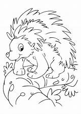 Animals Nocturnal Coloring Pages Porcupine Animal Printable Print Preschool Toddlers Classic Momjunction Visit Crafts Mask Comments sketch template