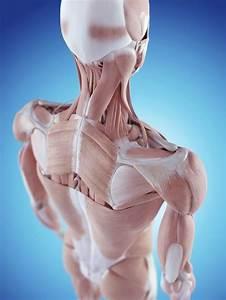17 Best Images About Shoulder Pain On Pinterest