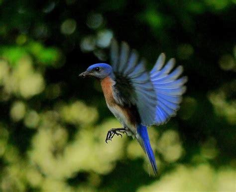 blue bird food bird cages