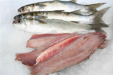 mullet fillets morgans  seafood store