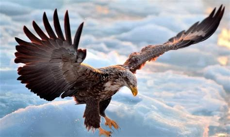 Eagle In Flight Wallpaper Flying Eagle Point Of View Freedom Alexsysmusic Youtube