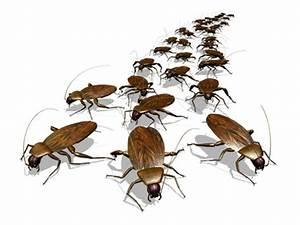 Cafard De Jardin Comment S En Débarrasser : extermination 3dsud de cafards et blattes 3dsud ~ Mglfilm.com Idées de Décoration