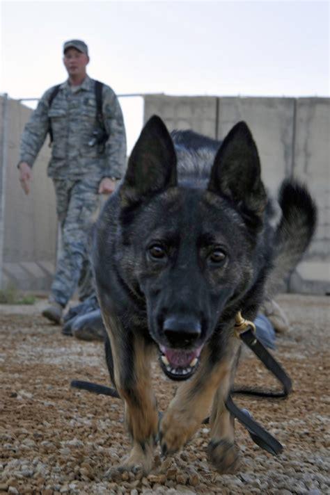 honoring   legged soldiers    veterans day