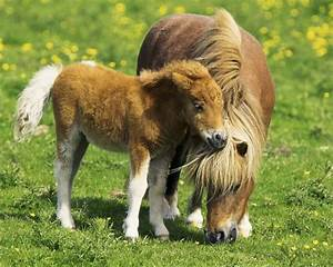 Wie Lange Sollte Man Kontoauszüge Aufheben : kennst du dich mit pferden aus ~ Lizthompson.info Haus und Dekorationen