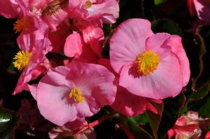 Annual Flower Trial Garden Reveals This Year U2019s Winners