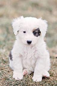 Super Cute Adorable Puppy Dog Eyes