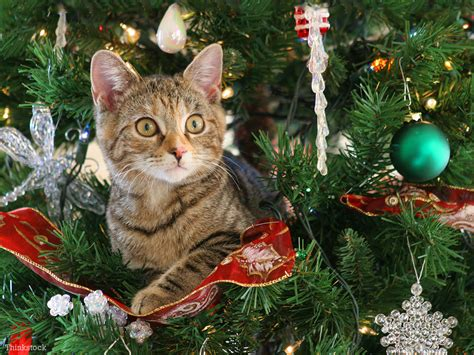 help how do i keep my cat out of the christmas tree
