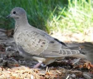 Wild Birds Unlimited: August 2012