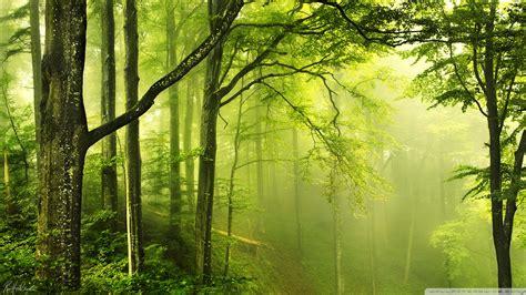 Beautiful Green Forest 4k Hd Desktop Wallpaper For 4k